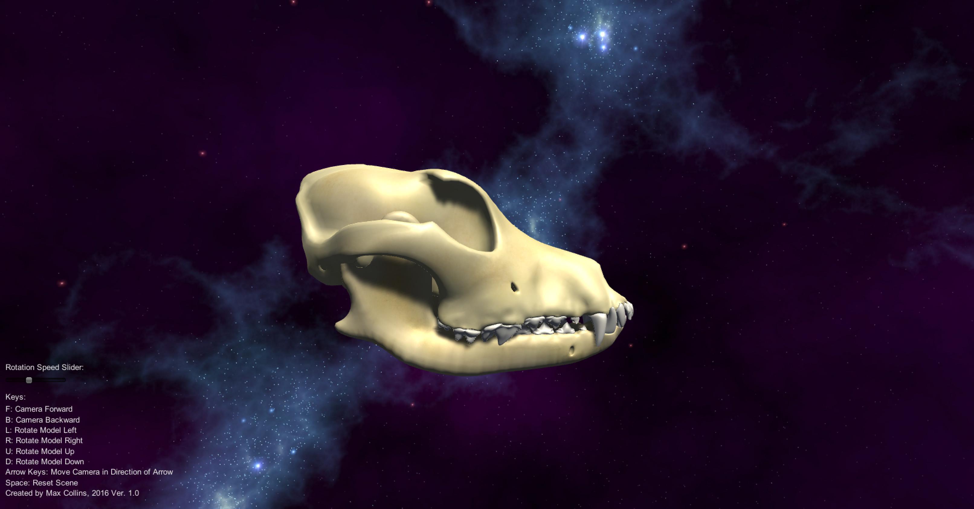 Dental Dog