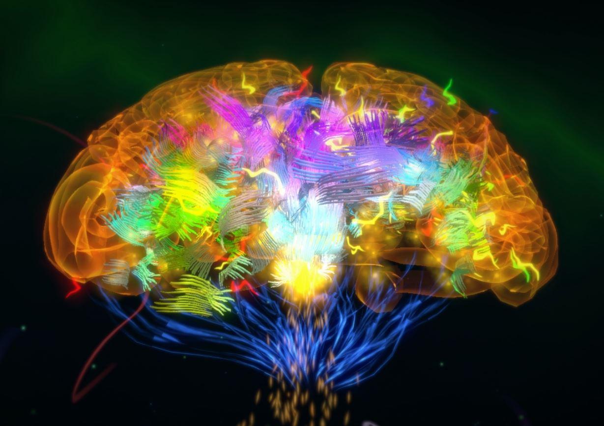 ADAM Brain VR