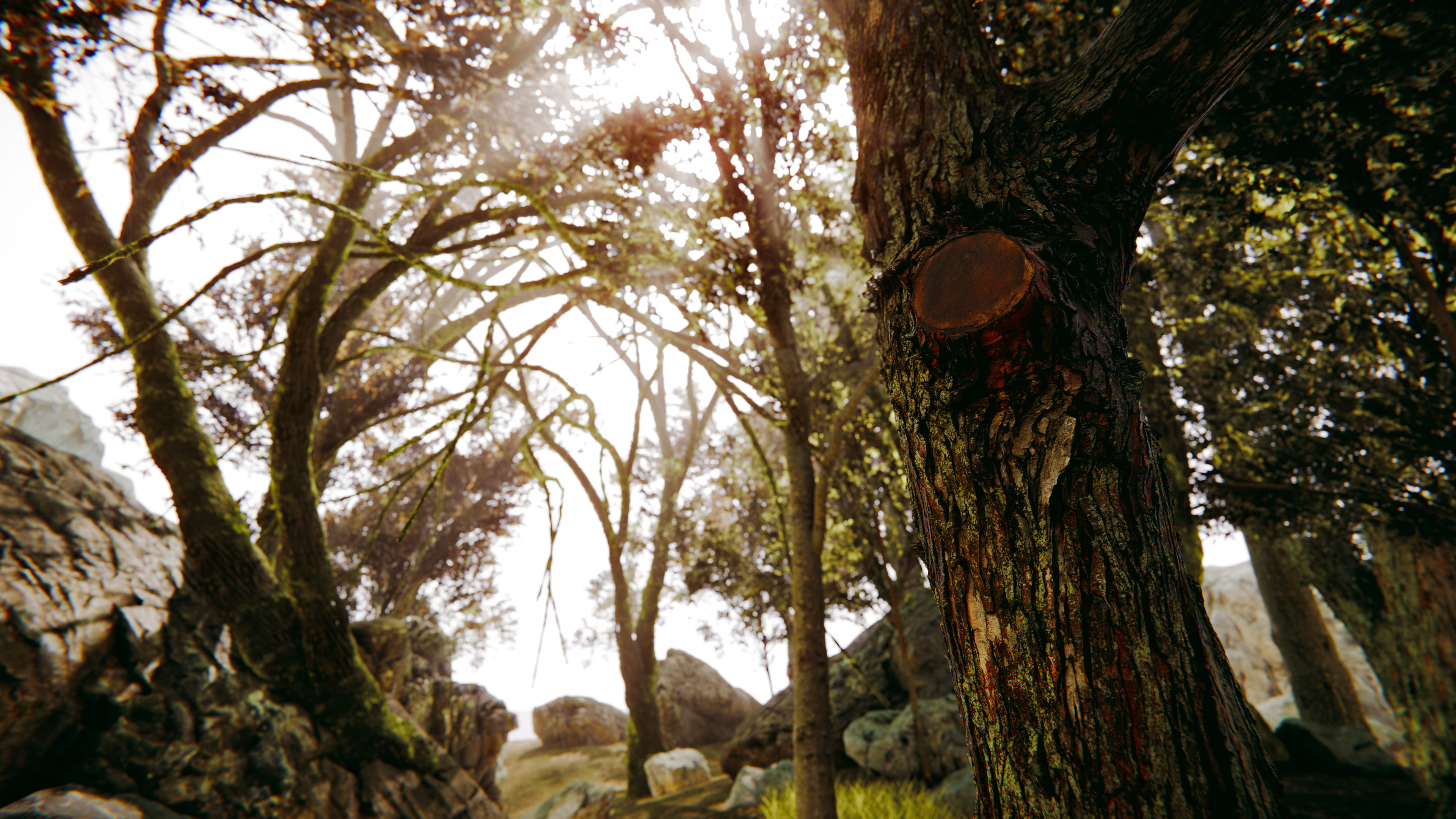 Photogrammetry Tree Study