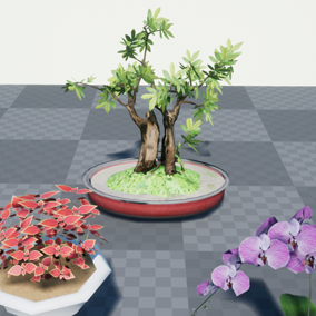 Bonsai Tree, plant and flowers