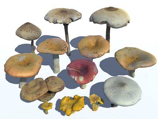 Forest Mushrooms Vol. 2