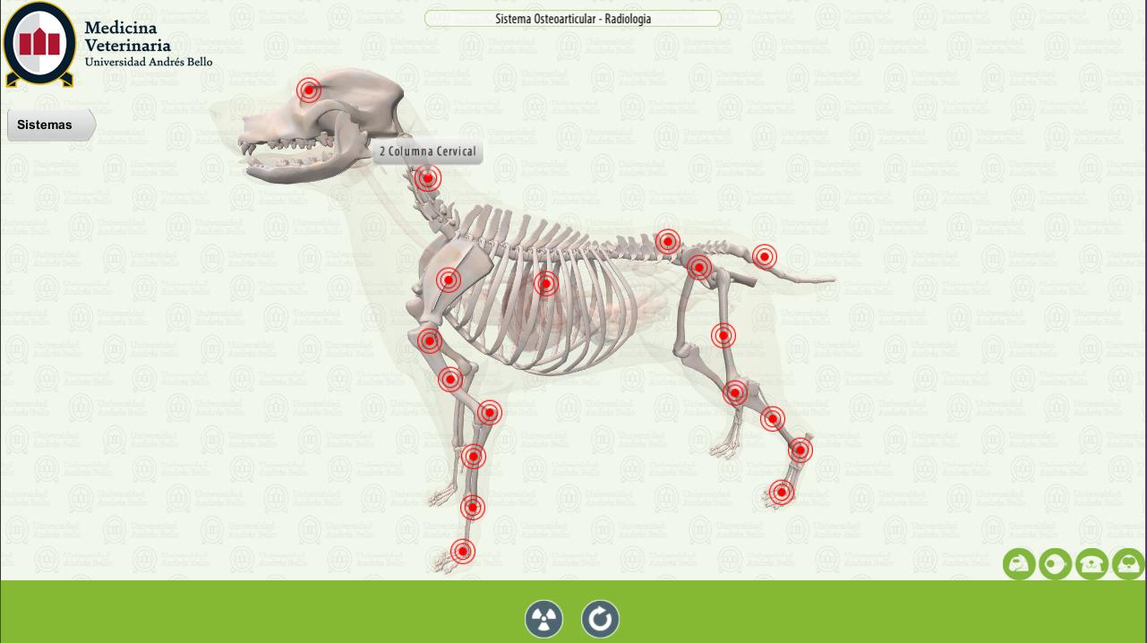 UNAB Canine Anatomy