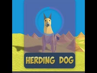 Herding Dog