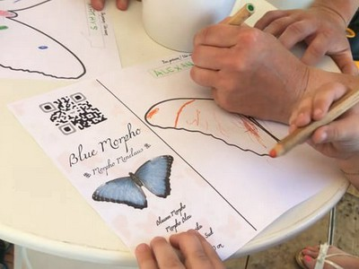 Drawing to 3D Butterflies